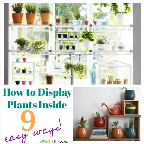 How To Display Plants Inside 9 Easy Ways My Craftily