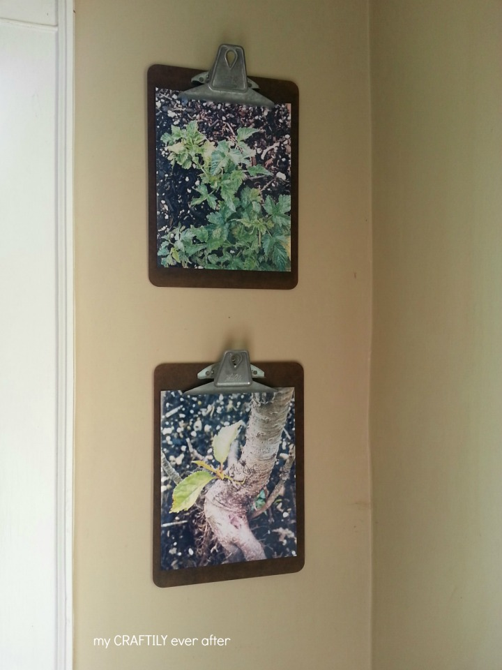 photos mounted on clipboards - easy to change out and customize your display