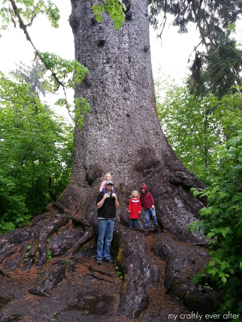 worlds largest sitka spruce lake quinault